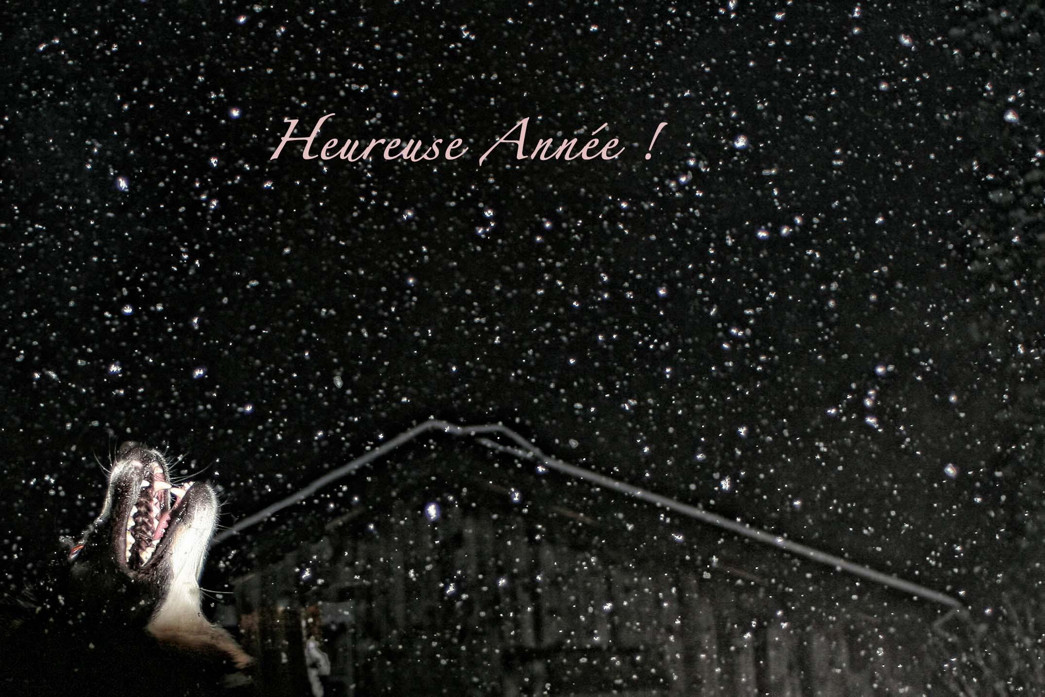 Dansen Op De Vulkaan Van Animatiefilm Tot Pipowagen In Frankrijk